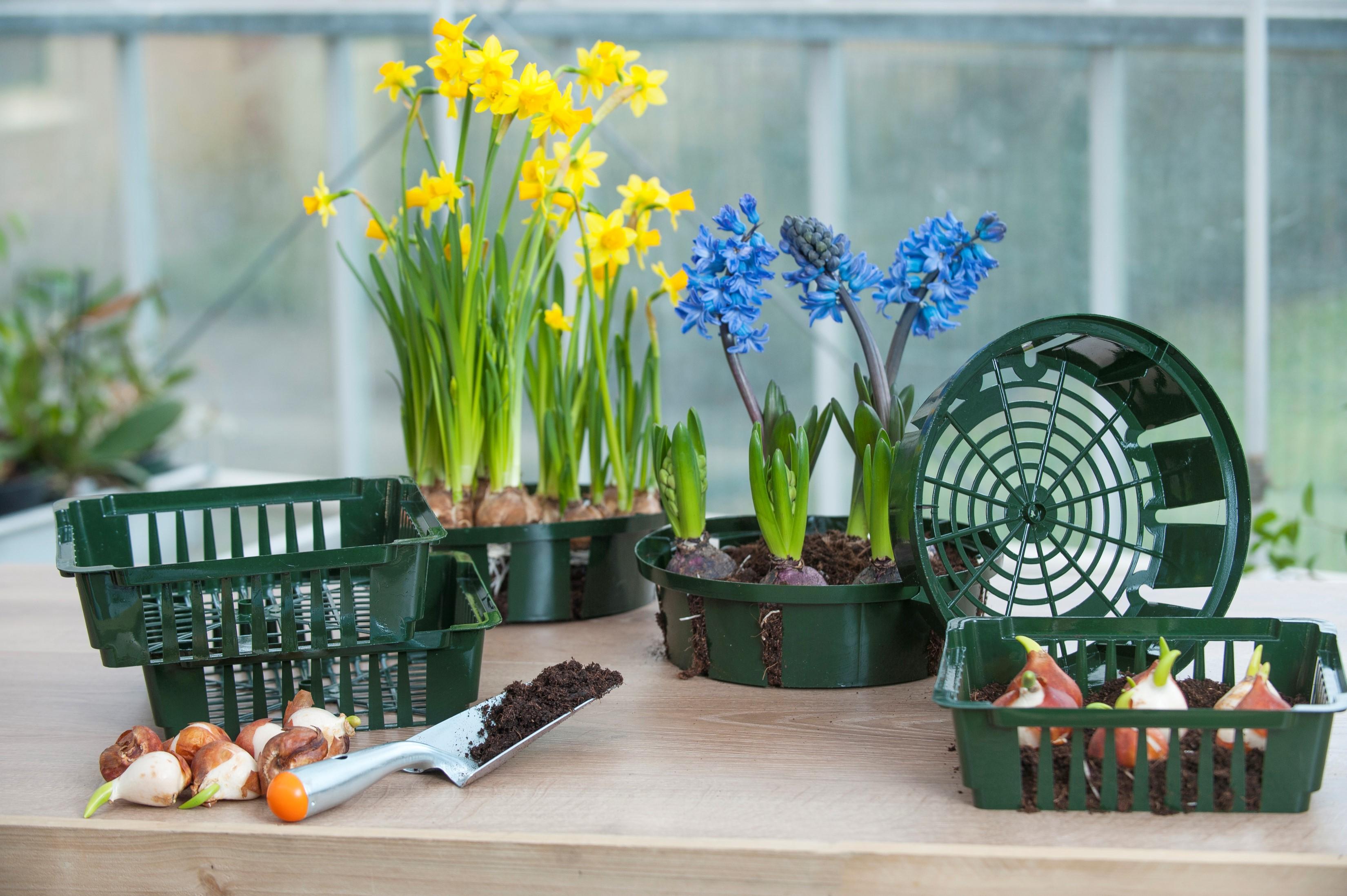 Tavaszi tennivalók, hogy szép legyen a kert