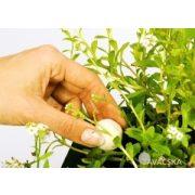 Vízinövény tápgolyó