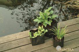 Vízinövény tasak szögletes 18cm