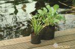 Vízinövény tasak kerek 25cm
