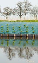 Talajtakaró,zöld 1x100