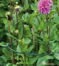 Virágtartó gyűrű vario