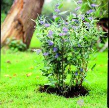 Növénytámasz 45x120