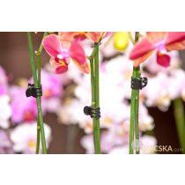 Orchidea rögzítő szett fekete színben