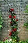 Rózsakapuk, Zöldfal